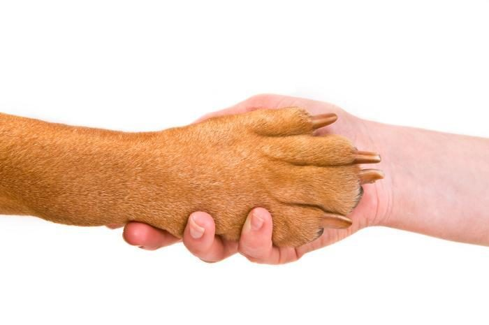 M&A, market strength help pet food end 2020 on upswing