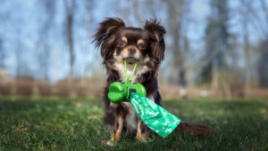 Tips for Going Green with Pets