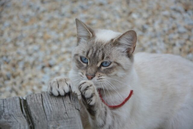 clipping cat's claws
