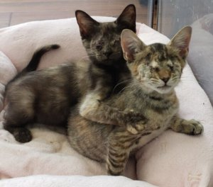 CattyCorner: Eye Infections Lead Two Kittens To Blindness, But Tessa And Tilly Feel Much Better Now