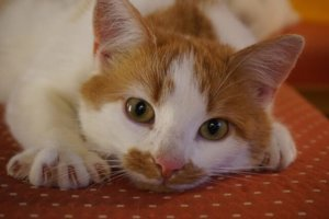 What To Know About Clipping Your Cat's Nails