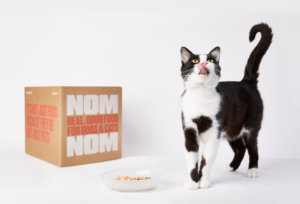 The Right Weight Loss Diet for Your Cat