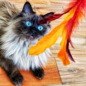 CattyCorner: The Whimsy Of Wand Toys For Cats