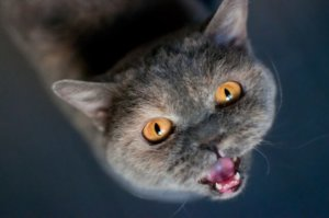 CattyCorner: Urinary Tract Infections Are A Pain In The Tail