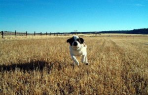 Will organic pet food sales ever reach their potential?