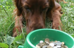 Pet food manufacturing adds $127 billion to US economy