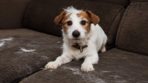 Different Types of Pet Hair Loss
