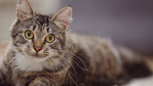 How to Recognize and Treat Mites on Your Cat