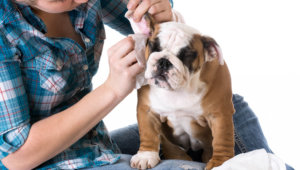 Helpful Tips: Cleaning Your Dog's Ears