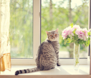 5 Ways You Can Be A Better Cat Owner This Year
