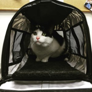 Priceless Reactions: Cats Who Suddenly Realized That They've Been Taken…To The Vet