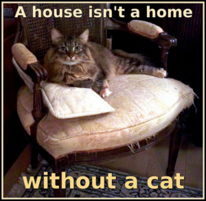 Smelly Cat? 8 Tips To Selling A House When You Own A Cat