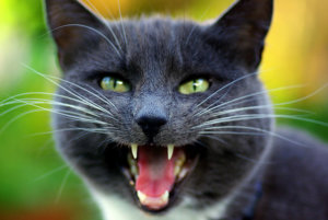 Here Are The Reasons Behind These 6 Common Cat Noises
