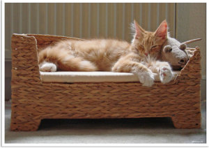 Finally Music For Cats – What Does Your Cat Think?