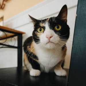 The Top 7 Reasons Cats Avoid The Litter Box