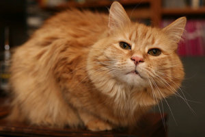 8 Ways To Keep Your Cat Purring