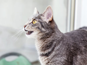 Ask A Vet: Why Does My Cat Chatter At Birds?