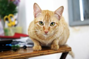 Ask A Vet: Top 5 Items Every Cat Owner Should Have