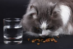 Ask A Vet: Why Does My Cat Only Like Dry Food?