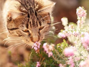 How Scent Can Calm Your Anxious Kitty