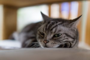 5 Ways To Convince An Aloof Cat To Like You