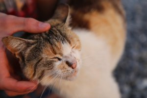 Why Do Cats Like Some Humans But Not Others?