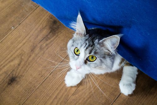 5 Tips For Socializing a Shy Cat
