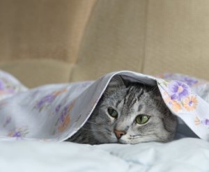 7 Cleaning Tips For Cat Owners
