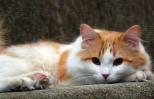 Ask A Vet: How Do I Find the Best Cat Food?