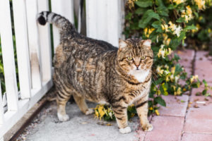 7 Signs Your Cat Needs More Exercise