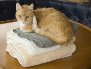 Hospice Care Is For Cats Too