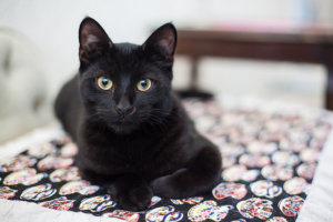 9 Things To Do Before You Bring A New Cat Home