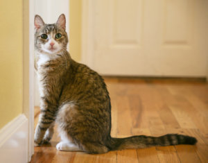 Ask A Vet: Could My Cat Be In Pain?