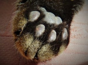 Bill Proposed To Make The Declawing Of Cats Illegal In New York