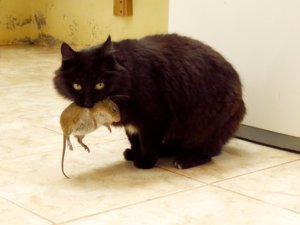 Ask A Vet: Why Does My Cat Bring Me Dead Mice?