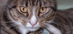 7 Feline Herpesvirus Facts You Need To Know