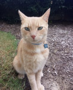 Special Message On Lost Cat's Collar Saves His Life