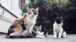 This Animal Welfare Group Just Opened A Free Spay / Neuter Clinic For All Cats