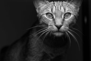 Ask A Vet: Can My Cat See In The Dark?