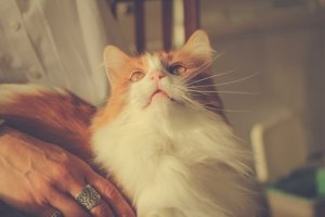 Using Pain Relief Cream On Yourself Can Cause Deadly Exposure To Your Cat