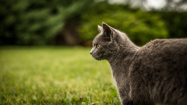 ALERT: Local Cat Tests Positive For Rabies