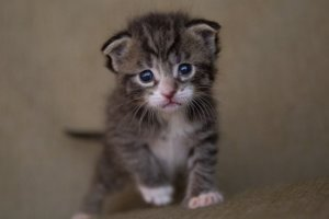 Here's How To Care For Young Orphaned Kittens