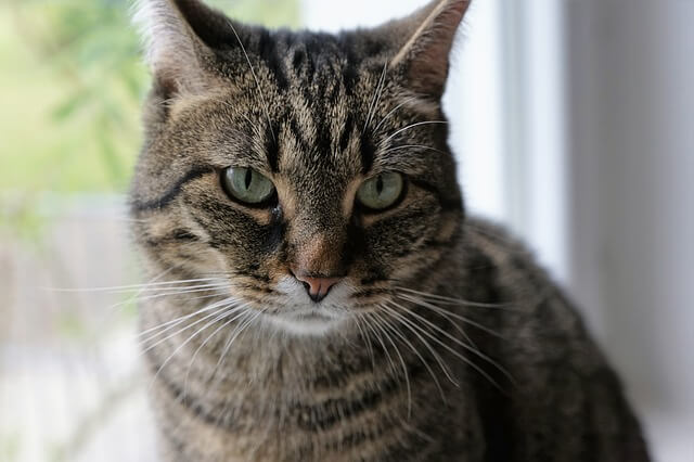 Another Cat Has Been Diagnosed With The Plague–The Third In 6 Months