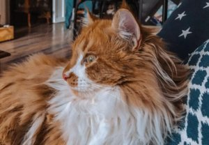 13 Signs Your Cat Will Probably Live A Long Life