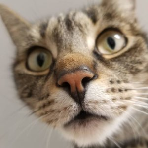 CattyCorner: 7 Questions Cat Parents Can't Help Asking