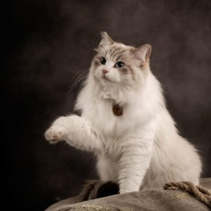 Clicker Training Cats: How To Teach Your Kitty Clicks Equal Rewards