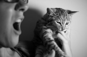 11 Reasons Why Cats Suddenly Attack Us
