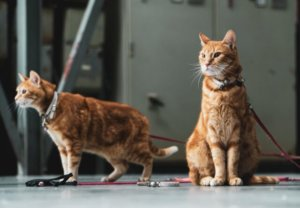 Puppy Cats: 21 Cat Breeds That Act Like Dogs