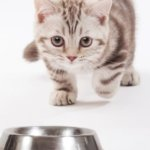 Cats are 'underserved': Will pet food industry fix that?