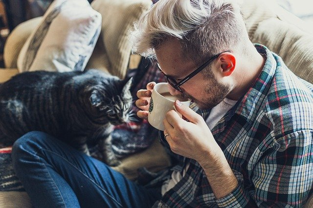Can Cats Drink Tea And Other Caffeinated Beverages?